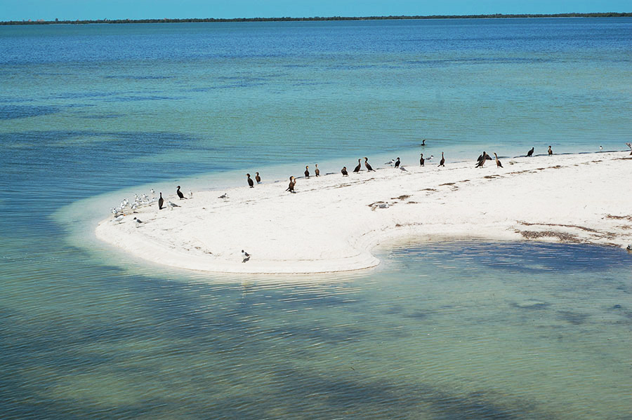 holbox island mexico nature escape small luxury hotel whale sharks