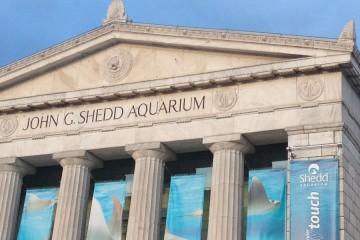 Sheed Aquarium Chicago