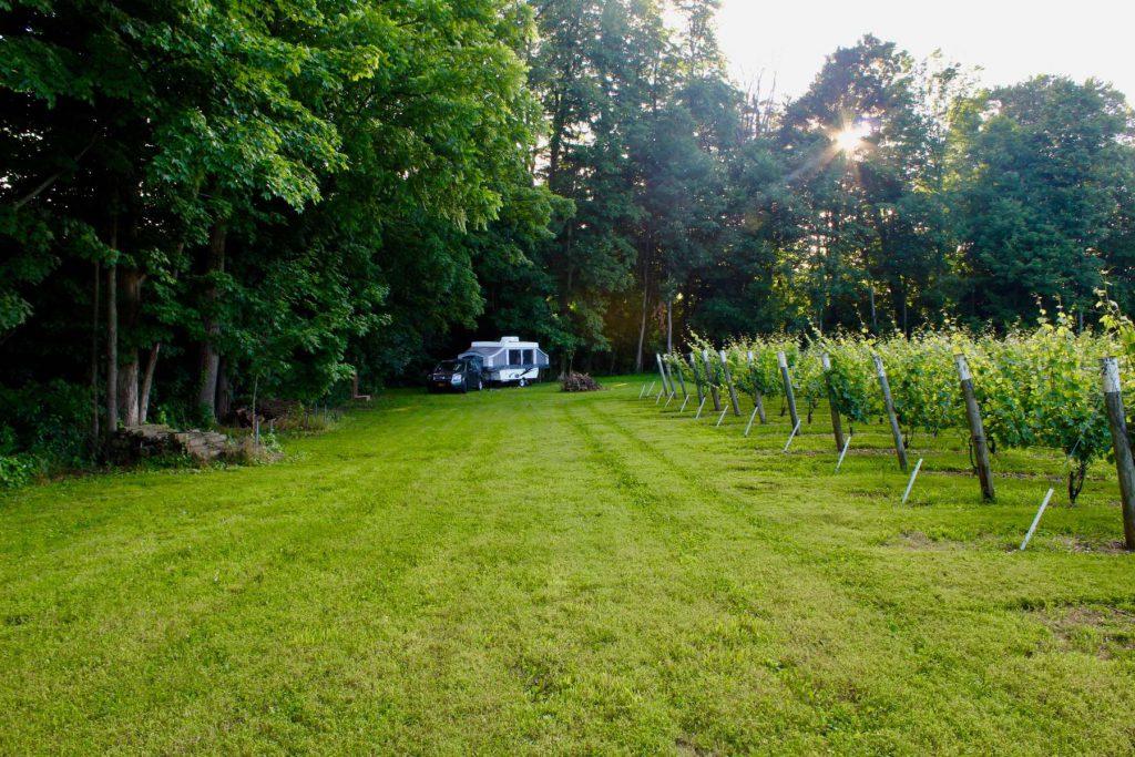 Mulln Heim Vineyards Michigan